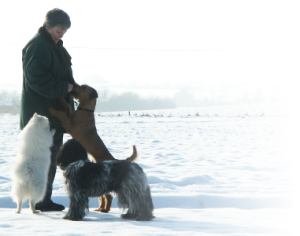 A.Univ. Prof. Dr.med.vet. Irene Sommerfels-Stur Empfehlenswerte Seite über Hunde & Genetik